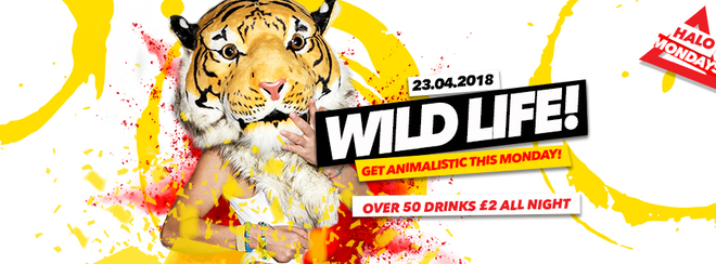 Wild Life 23.04.18 Halo Bournemouth